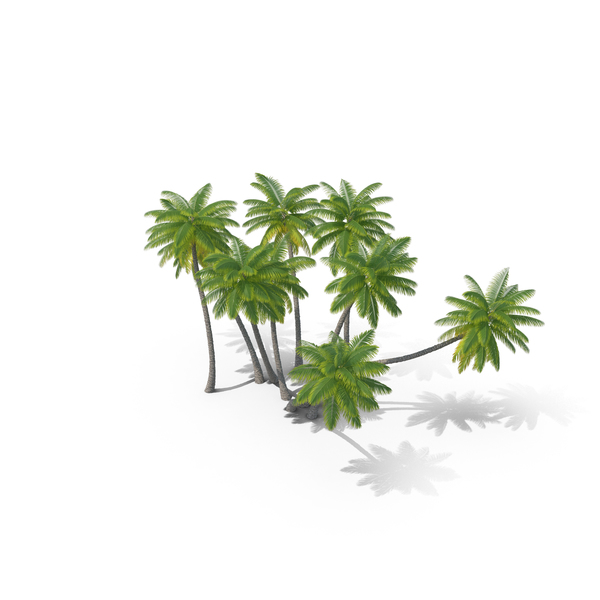 Palm Trees PNG & PSD Images