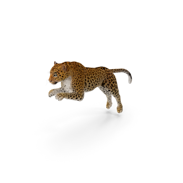 Panthera Pardus Jumping Pose with Fur PNG & PSD Images