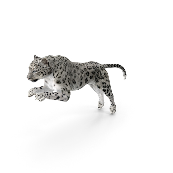 Panthera Uncia Jumping Pose PNG & PSD Images