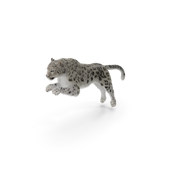 Panthera Uncia Jumping Pose with Fur PNG & PSD Images