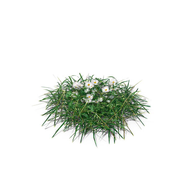 Patch of Grass and Flowers PNG & PSD Images