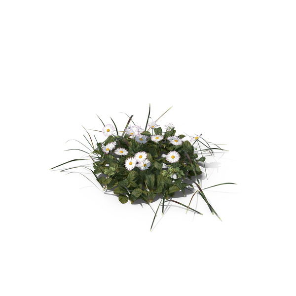 Grasses: Patch of Grass and Flowers PNG & PSD Images