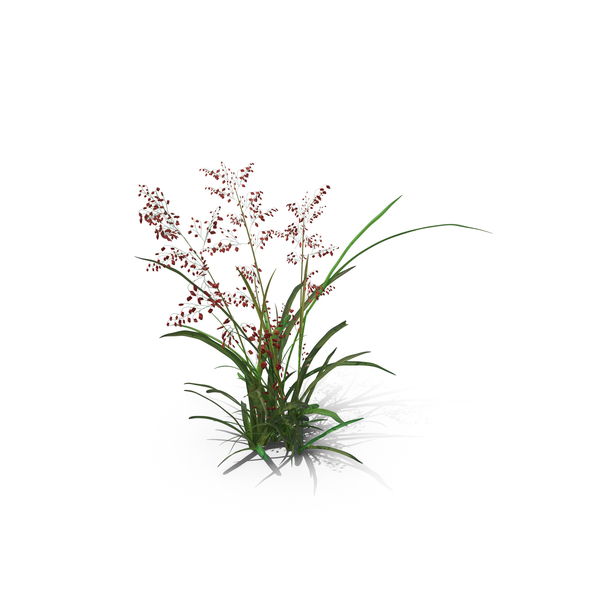 Grasses: Pearl Grass PNG & PSD Images