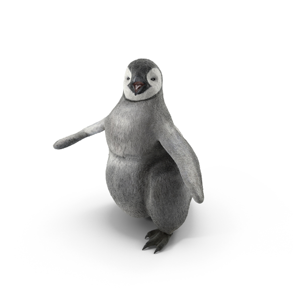 Penguin Baby Walking Pose PNG & PSD Images