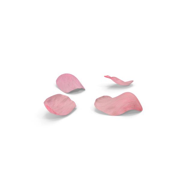 Petal Roses Pink PNG & PSD Images