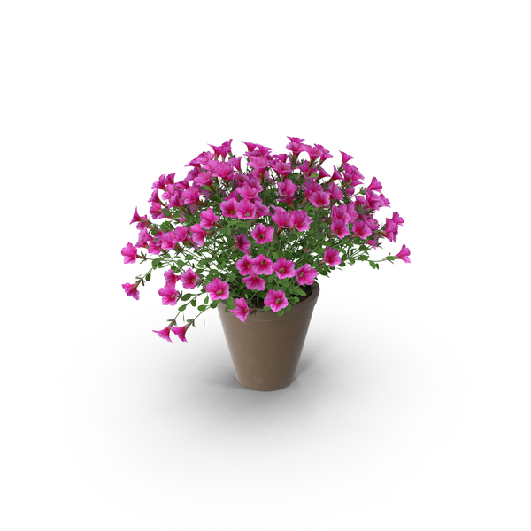 Petunia in Brown Pot PNG & PSD Images