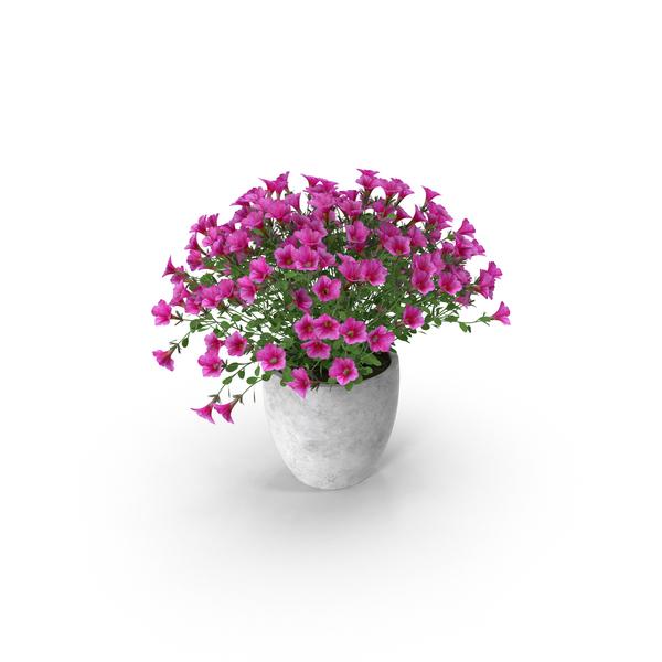 Petunia Pot PNG & PSD Images
