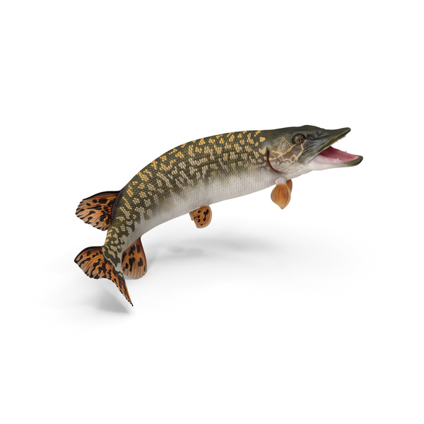 Pike Fish Jump Out Pose PNG & PSD Images
