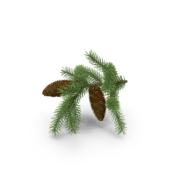 Branch: Pine Tree Sprig PNG & PSD Images