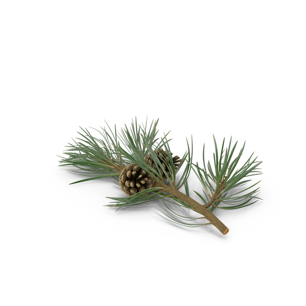 Pine Tree Sprig Object