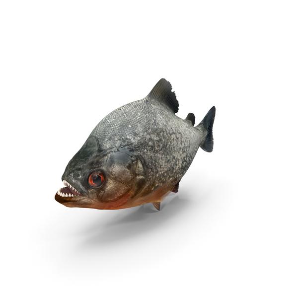 Piranha PNG & PSD Images