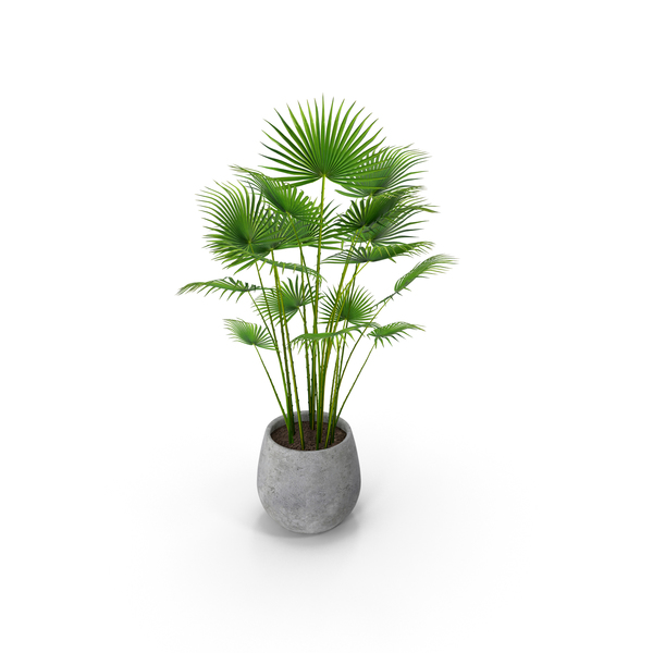 Plant PNG & PSD Images