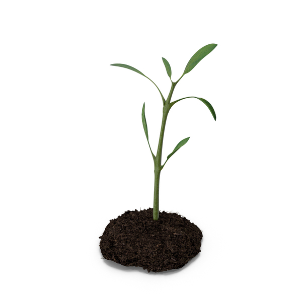 Plant Ground PNG & PSD Images