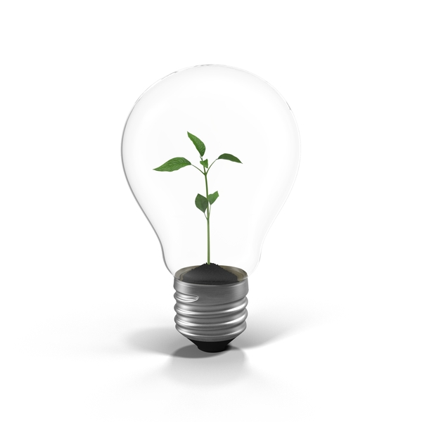Plant in a Light Bulb PNG & PSD Images