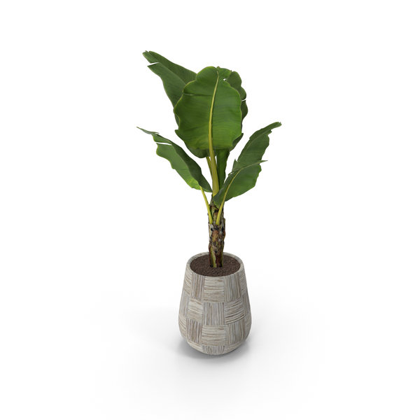Monstera: Plant in Grey Vase PNG & PSD Images