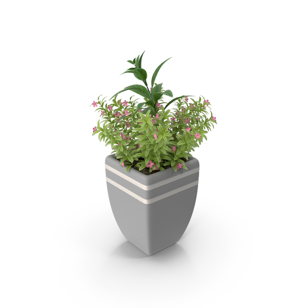Flower Support: Plant in Pot PNG & PSD Images