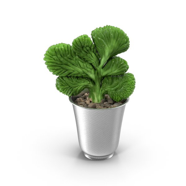 Flower Pot: Plant in Silver Planter PNG & PSD Images