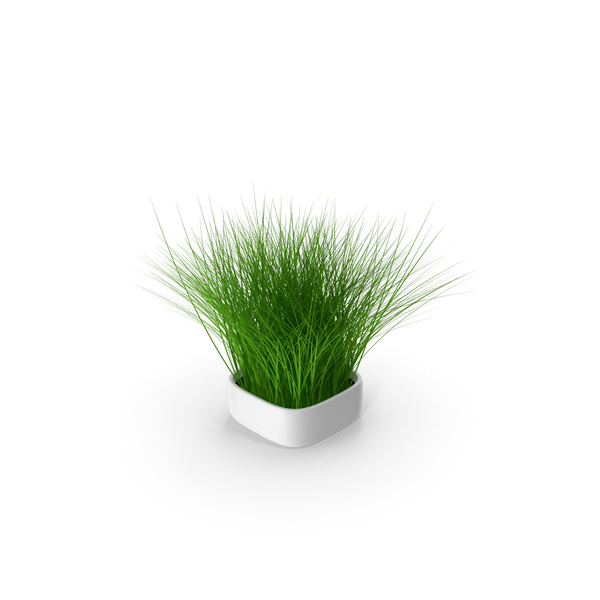 Plant in Square Pot PNG & PSD Images