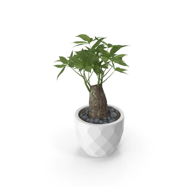 Planter: Plant PNG & PSD Images