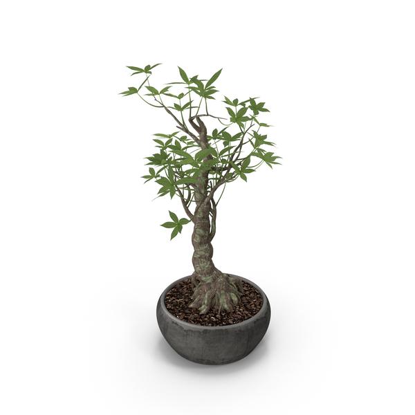 Plants: Plant PNG & PSD Images
