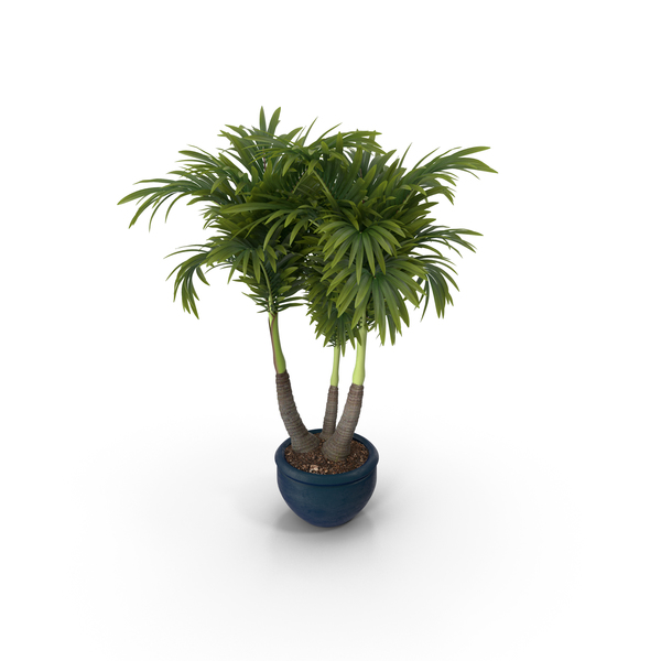 Flower Pot Support: Plant Potted PNG & PSD Images