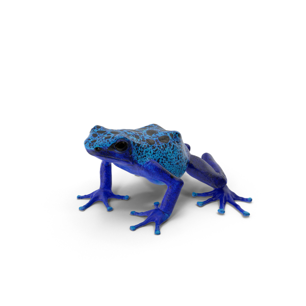 Poison Dart Frog Object