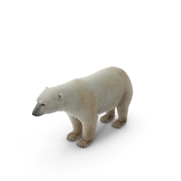 Polar Bear Object