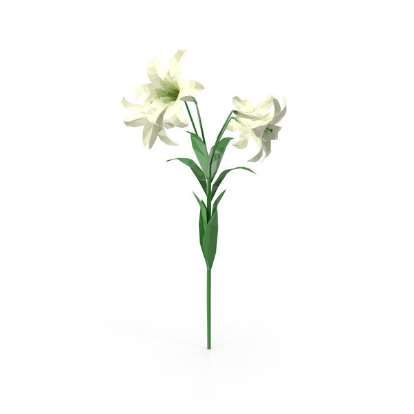 Polygonal Lily Flower PNG & PSD Images