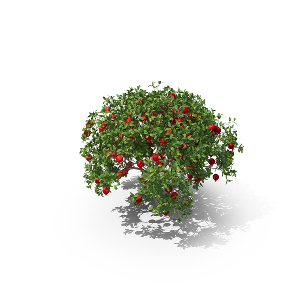 Fruit: Pomegranate Tree PNG & PSD Images