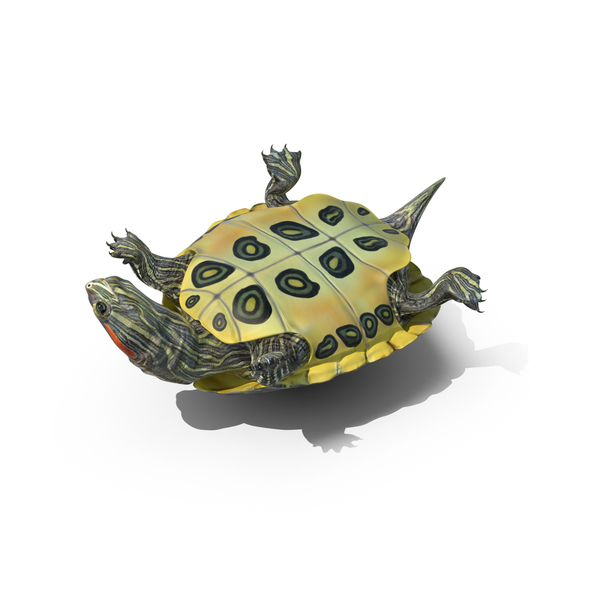 Pond Slider Turtle Object