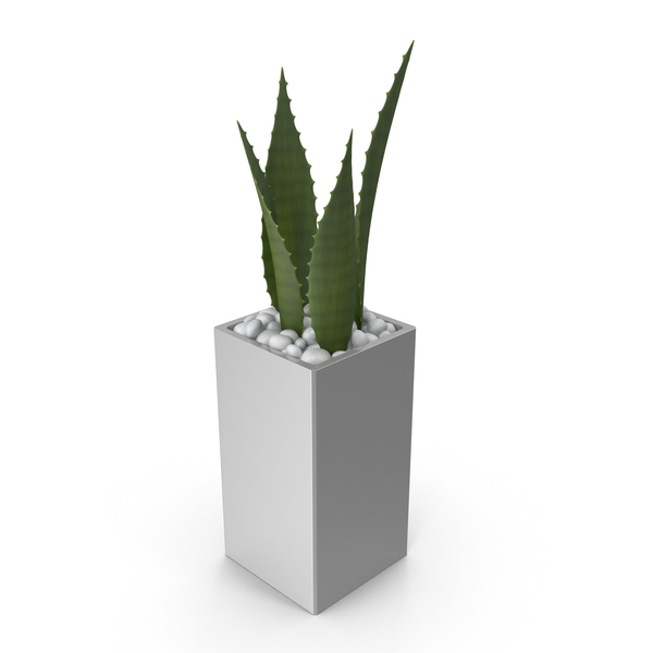 Potted Aloe PNG & PSD Images