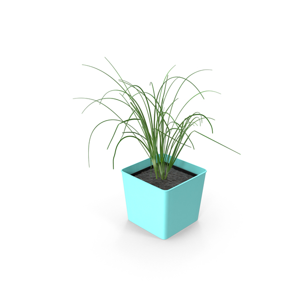 Potted Chives PNG & PSD Images