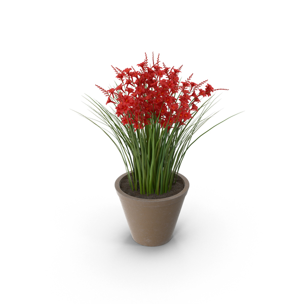 Flowering Plants: Potted Crocosmia PNG & PSD Images