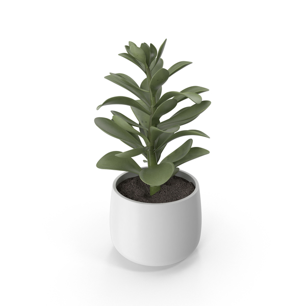 Potted Faux Succulent PNG & PSD Images
