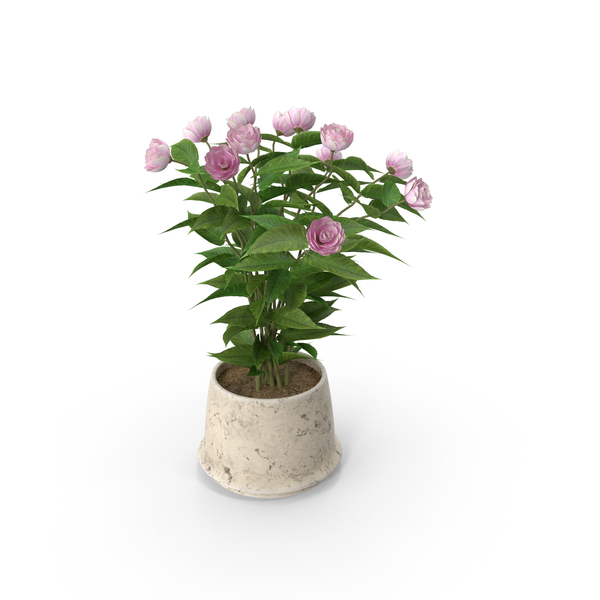 Pot: Potted Flower PNG & PSD Images