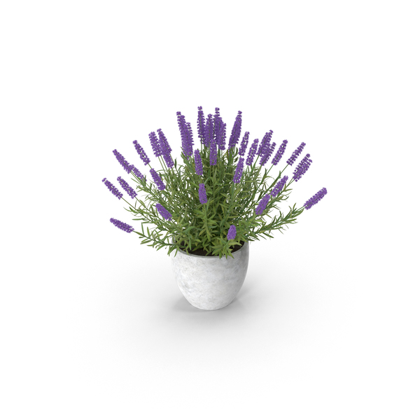 Potted Lavender PNG & PSD Images