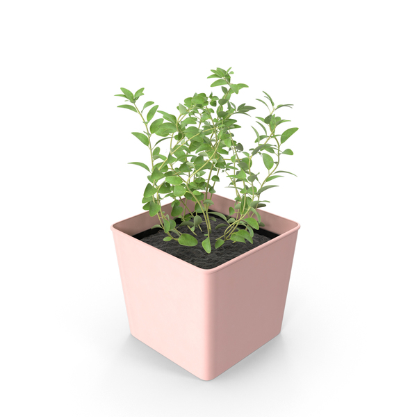 Potted Oregano PNG & PSD Images