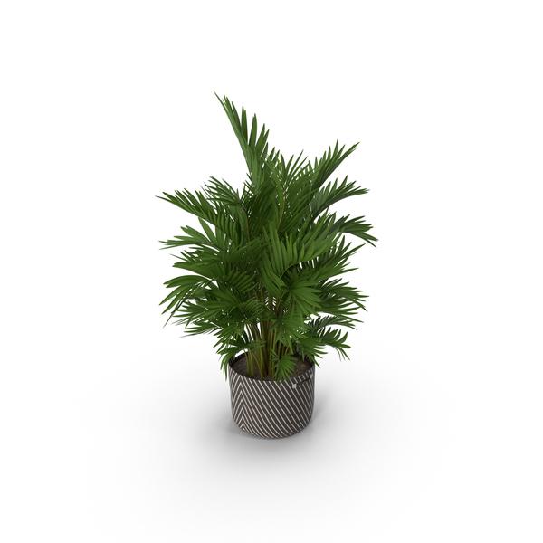 Flower Pot: Potted Palm Plant PNG & PSD Images