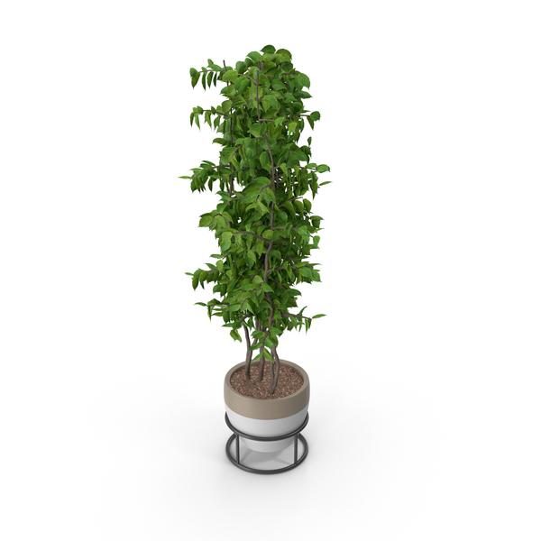 Flower Pot: Potted Plant PNG & PSD Images
