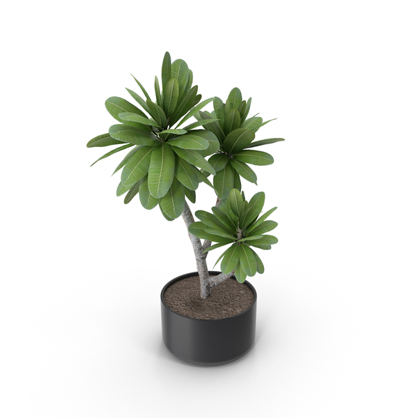 Potted Plant PNG & PSD Images