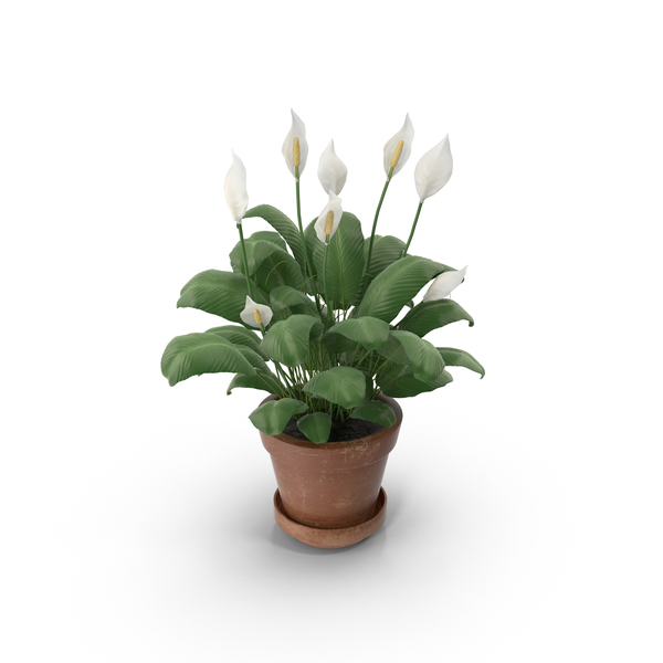 Flower Pot: Potted Plant PNG & PSD Images