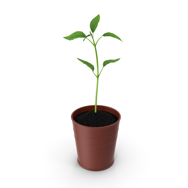 Plants: Potted Plant PNG & PSD Images