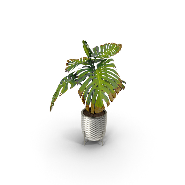 Potted Plants Set PNG & PSD Images