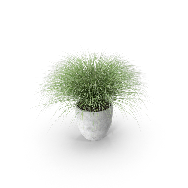 Potted Sedge PNG & PSD Images