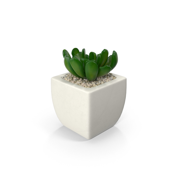Potted Succulent Plant PNG & PSD Images