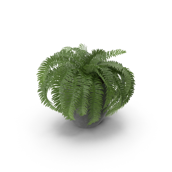 Potted Sword Fern PNG & PSD Images