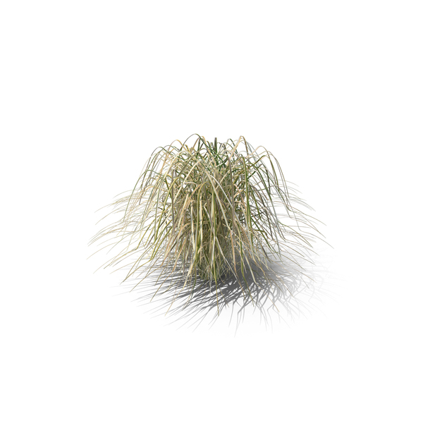 Prairie Cordgrass PNG & PSD Images