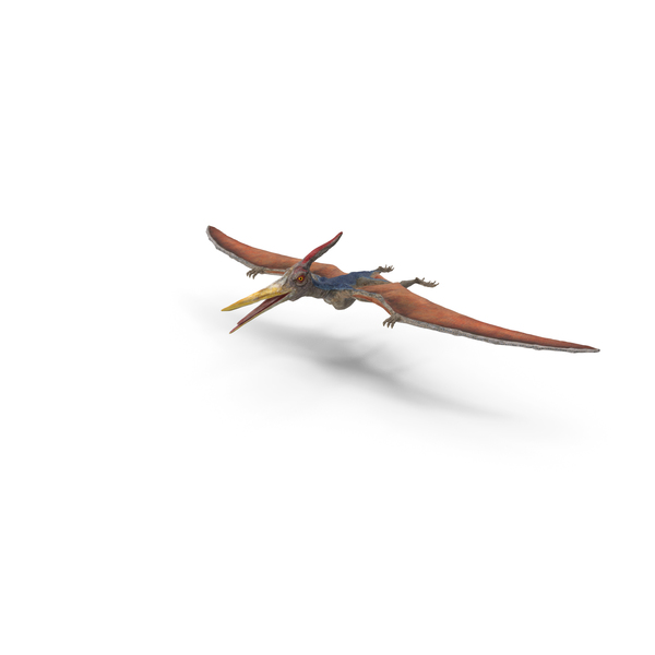 Pteranodon PNG & PSD Images