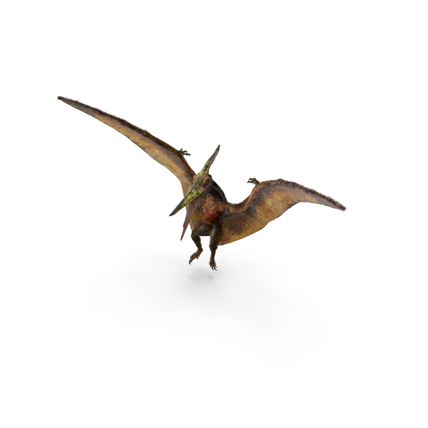 Pteranodon Flying Carnivorous Reptile Landing Pose with Fur PNG & PSD Images
