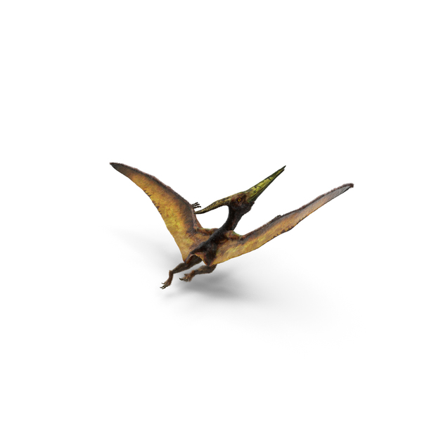 Pteranodon Flying Carnivorous Reptile Flying Pose with Fur PNG & PSD Images